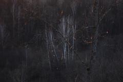 golden gate for an hour III (Mindaugas Buivydas) Tags: lietuva lithuania color spring april tree trees birch sunset evening eveninglight valley rivervalley dūkšta nerisregionalpark neriesregioninisparkas shallowdepthoffield mindaugasbuivydas