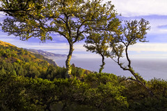 The view from Nepenthe (crabsandbeer (Kevin Moore)) Tags: 2018 california landscape november october trip nepenthe pch pacificcoasthighwaypacific bigsur oilpaintfilter photoshop goldenhour sunset ocean horizon westcoast travel fall autumn golden light