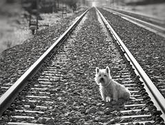 ¿ Qué es confiar en mí? Pues pedirle a Tula que se siente en la vía del tren para hacerle una foto, y hacerlo sin protestar. (elena m.d.) Tags: new tula guadalajara elena sigma sigma105 nikon d5600 street