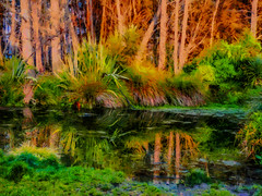 The Pond in the Woods (Steve Taylor (Photography)) Tags: pond digitalart brown green blue water lake newzealand nz southisland canterbury christchurch flax grass trees fir forest reflection texture bottlelakeforest dawn sunrise autumn