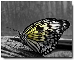 Butterfly............. (reign 60) Tags: chesterzoo butterflyhouse themacrogroup