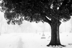 Tree In fog (Josh152) Tags: foggy eauclaire blackandwhite nikon tree d800 nature wisconsin winter cemetery fog bw nikond800 snow lakeviewcemetery