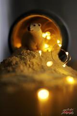 Plastic pets..Polar bear (psychosteve-2) Tags: polar bear snow lights plastic