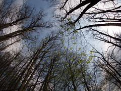 szívek a légben összeérnek / hearts meet on the air (debreczeniemoke) Tags: tavasz spring erdő forest fa tree ég sky halszem fisheye olympusem5