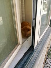 Lisbon 2018 – Cat (Michiel2005) Tags: cat window kat poes raam lisboa lissabon lisbon portugal