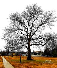 IMG_0820 Sidewalk (Cyberlens 40D) Tags: nature trees branches seasons winter nj streets urban scenery platinumheartaward aoi elitegalleryaoi bestcapturesaoi