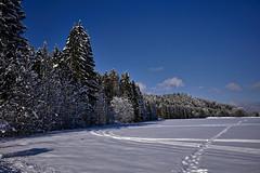 Winter am Waldrand (Helmut Reichelt) Tags: waldrand bäume weis baum verschneit felder schnee viel sonne winter februar geretsried böhmwiese oberbayern bavaria deutschland germany leica leicam typ240 captureone12 dxophotolab leicasummilux35mmf14asphii
