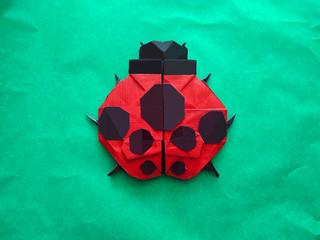 7-spot Ladybug by me