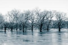 River Flood Ice (Grant is a Grant) Tags: nikond7200 70300mmafp 70300mm february winter flood kingston novascotia canada ca ice trees monochrome split tone annapolisvalley ns