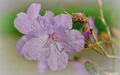 Spring blooms... 🌸 (Mona Zimba) Tags: tangledfx spring bloom flowers nature blossom springseason
