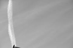 (Mikko Luntiala) Tags: 2019 airplane aviation bw bird blackandwhite contrail d600 february finland gray grey harmaa helmikuu helsinki lentokone lentäminen lintu mikkoluntiala mustavalkoinen nikond600 silhouette siluetti sky suomi taivas tamronsp70200mmf28divcusdg2 tiivistymisjuova tiivistymisvana
