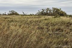6D_Aransas (23)-Edit (Scott Sanford Photography) Tags: 6d canon eos landscape naturalbeauty naturallight nature outdoor springbreak texas topazlabs