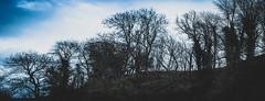 Treeline (jayteacat) Tags: youlgrave youlgreave derbyshire whitepeak peakdistrict treeline trees nikond810