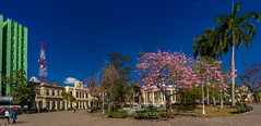 The Panoramas - West view of Vidal Park centered by the Concert Gazebo and a Cuban White Oak in bloom (lezumbalaberenjena) Tags: panorama panoramic cuba villas villa clara santa lezumbalaberenjena 2019 parque park vidal