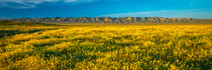Carrizo Plains Spring Wildflowers Superbloom! God Spilled a Bucket of Paint Sony A7R III & Carl Zeiss 16-35mm F4.0 Spring Wild Flower Super Bloom Elliot McGucken Fine Art Landscape & Nature Photography! Springtime Flowers Blooming! (45SURF Hero's Odyssey Mythology Landscapes & Godde) Tags: california poppies wildflower superbloom spring wild flower super bloom elliot mcgucken fine art landscape nature photography springtime flowers blooming ed vr from god spilled bucket paing sony a7r iii carl zeiss 1635mm f40