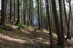 Nebelwald (Aah-Yeah) Tags: nebelwald nebel wald forest sonne sun achental chiemgau bayern fog mist