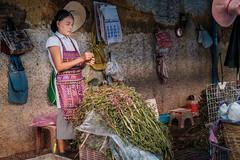 Preparing the water mimosa for the market. (Goran Bangkok) Tags: chinatown vegetables woman bangkok thailand food mimosa water preparing market worker