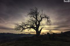 Calma - Calm (danielfi) Tags: paisaje landscape asturias asturies marabio montaña mountain naturaleza nature árbol tree cielo sky long exposure larga exposición contraluz silhouette silueta backlighting ngc
