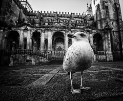 Guard. Porto, Sé Catedral. (Pawel Wietecha) Tags: porto se catedral portugal seagull bird old building church blackandwhite bw mono monochrome blanc weis schwarz noir black white blackwhite guard travel