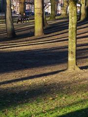 utrecht (gerben more) Tags: park parc trees shadow utrecht netherlands nederland