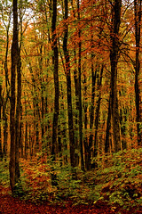 autumn 10 (juan luis olaeta) Tags: autumn udazkena otoño paisajes landscape hayedo pagoa natura