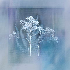 24/365 (Jane Simmonds) Tags: iphone multipleexposure plants winter 3652019 abstract spiraea