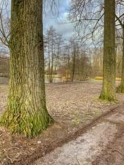 Wemmel, Beverbos #6 (foto_morgana) Tags: aurorahdr2019 belgië belgique belgium beverbos bomen boom eyelevelview invierno iphonexsmax landscape landschap nature naturereserve natuur natuurreservaat on1photoraw2019 outdoor paysage reservanatural réservenaturelle scenic topazjpegtorawai topazstudio trees vzwnatuurpunt wemmel