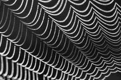Drops (moments in nature by Antje Schultner) Tags: spider´s web spinnennetz tau dew tropfen drops black white schwarz weiss makro macro