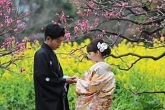 Bride and Groom (seiji2012) Tags: 花嫁 浜離宮庭園 梅 菜の花 着物 japan tokyo hamarikyugarden ume rapeseed wedding kimono costume happyplanet asiafavorites