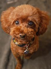 CoCo (mingboyyy) Tags: dog 犬