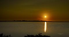 Vuelo al sol de las salinas (Fotgrafo-robby25) Tags: alicante amanecer aves flamencos salinasdesanpedro sol sonyilce7rm3