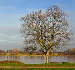 The Old Tree And The River (TablinumCarlson) Tags: theoldmanandthesea europa europe germany deutschland brd nrw neuss rhein rheinkreis rhine grimlinghausen rheinufer ufer baum tree düsseldorf fernsehturm rheinturm leica dlux dlux6 nordrheinwestfalen rheinland northrhinewestphalia kastanie chestnut kastanienbaum chestnuttree river fluss winter