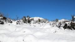 tonto-national-forest-1902230338 (nagerfran) Tags: cactus winter desert storm snow cold freeze arizona scottsdale tontonationalforest