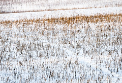 WinterTexture.jpg (Klaus Ressmann) Tags: klaus ressmann agoettelsbrunn austria abstract nikon snow vineyard winter design flcabsnat minimal softtones white klausressmann