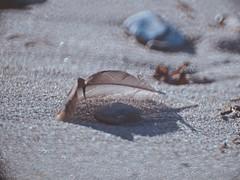 Beach Bokeh - Fehmarn - Baltic Sea - 15. Februar 2019 - Fehmarn - Schleswig-Holstein - Deutschland (torstenbehrens) Tags: beach bokeh fehmarn baltic sea 15 februar 2019 schleswigholstein deutschland