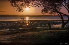 Fishermen (Lisa M / /) Tags: tree sunset beach bribieisland brisbane australia queensland ngc