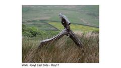 Walk - Goyt East Side - May17-015 (fpdave) Tags: walk goytvalley