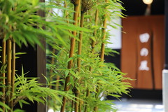 Entrance of Japanese restaurant (Teruhide Tomori) Tags: japan japon kyoto tradition culture 日本 京都 伝統 文化 entrance bamboo
