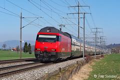 Revidierte Re 460 bei Hermiswil, P3230648-1 (Swiss Railway Photography) Tags: re460 hermiswil ic personenzug passengerstrain red glossy