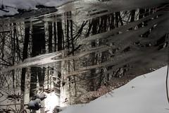 Peegeldus (Jaan Keinaste) Tags: pentax k3 pentaxk3 eesti estonia loodus nature kraav ditch vesi water jää ice lumi snow peegeldus reflection mets forest puu tree