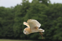 IMG_1429 (Stefan Kusinski) Tags: hemsley duncombe ncbp birdofprey