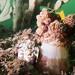 Contracted Dendronephthya australis #marineexplorer