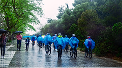 it's raining rain (mare_maris) Tags: cyclists pedestrians rain raincoats umbrella u ciclisti trasparente impermeabili pedoni ombrelli cyclistes manteauxdepluie piétons parapluies ciclistas impermeables peatones paraguas велосипедисты пешеходы зонтики 骑自行车的人 行人,雨伞 ποδηλάτεσ βροχή αδιάβροχα ομπρέλεσ bike urban landscape city rainyday blue green vivid moments citizens people child men woman streetphotography street bicycle cycle