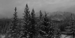 Canadian Rocky Mountains HSS (Mr. Happy Face - Peace :)) Tags: sky sun cloud mountains albertabound canada yoho nationalpark cans2s nature trees forest spring art2019 snow lakelouise black white bw