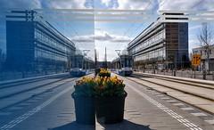 D'andere Blik: Dubbelzicht (Peter ( phonepics only) Eijkman) Tags: amsterdam city combino gvb flowers tulips tulpen tramstop halte tram transport trams tramtracks trolley rail rails strassenbahn streetcars nederland netherlands nederlandse noordholland holland