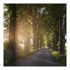 Spring Light - Kodak Porta 160VC exp* (magnus.joensson) Tags: sweden skåne söderslätt rolleiflex carl zeiss tessar 75mm f35 kodak porta 160vc exp sunset c41 may spring 6x6
