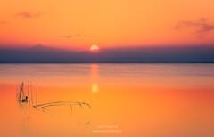 Valencia Albufera simplicity 0032 (joana dueñas) Tags: valencia albufera spain seascape sunset spring sun joanadueñas photofeeling