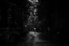 Hakone | 2018 (Rinzi Ruiz [street zen]) Tags: rinzi fujifilmxpro2 xpro2 japan hakone streetzen