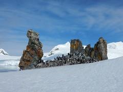 Elephant Island, Antarctic Peninsula (Mulligan Stu) Tags: elephantisland antarcticpeninsula antarctica chinstrappenguin