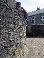 back lanes (chrisinplymouth) Tags: wall corner stone flower aubretia princerock backlane plymouth devon england uk city cw69x diagx alley inexplore urb explored plymgrp diagonal plain